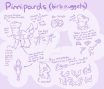 Pinnipard Species Quick Ref by ProudRyukin13