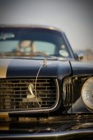 That Mustang... by dazecoop