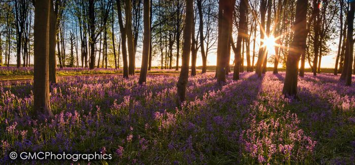 Sun Star over Bluebell woods by GMCPhotographics