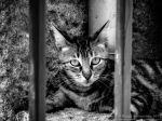 Behind Bars by Torkhelle