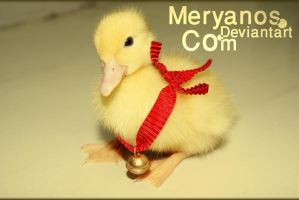 .: Yellow Duck :. by meryanos