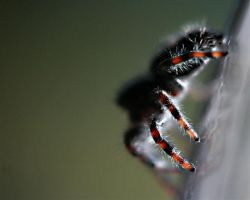 the last spider of summer.. by neaters2000
