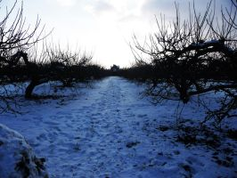 Snow orchard 2 by 7serenee