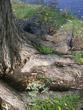 11-1-10 - Roots by CharlieDandy
