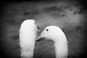 love and endless? and love? and ... ? by lindenberg