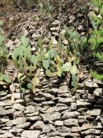 Cactus Wall by Altaria13-Stock