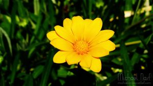 Yellow Flower IV by MichaelNN