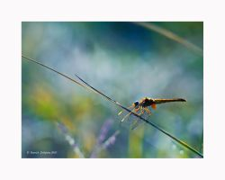 Dragonfly by YannickDellapina