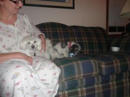my mom Molly and Gidget by LOST09