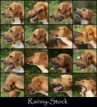 Dog Profile- STOCK by Rainny-Stock