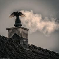Smoked Crow by EyeDance