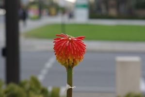 The City Plant by CAmpoo691