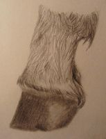 Study of Horse Hoof by ElizabethWillett