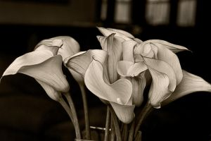 Yellow Lilies in BlackandWhite by muffet1