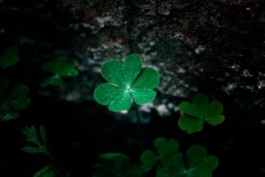 Speckled Clover by Squiddles66