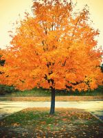 Autumn Tree by EveVictus