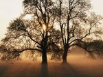 Trees by Tayldon