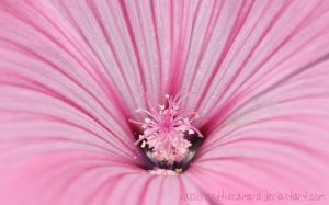Pink Flower by PassionAndTheCamera