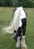 frontal graze or bow by Equine-Resource