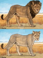 Lion and Lioness by Jezarae
