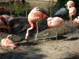 Flamingos 10 by my-dog-corky