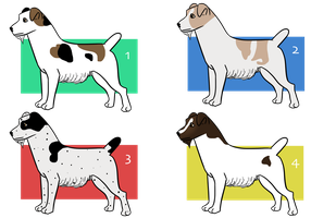 Jack Russell Terrier Imports by Sommer-Studios