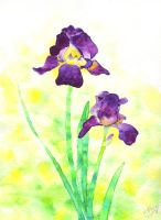 Irises by Iyou