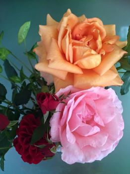 Roses from my garden by Dance0927