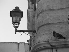 Lamps and bird by paolaquasar