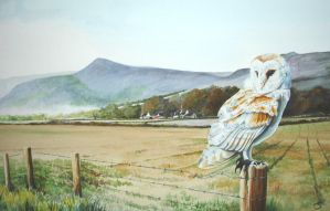 Barn Owl - Arran Scotland by Atriedes