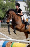 Jumping Ted by Equine-Help