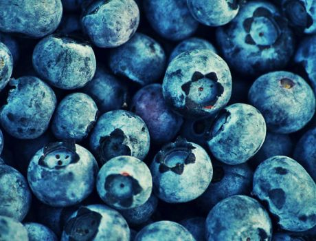 ~blueberries by jusatka