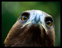 predator eyes by morho