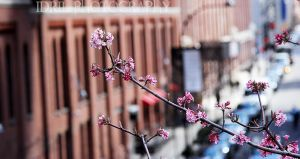 Flower in New York by Annso94