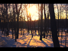 Winter forest :) by InvisibleHorizon