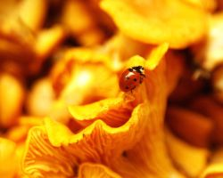 Ladybird on yellow by photo-exile
