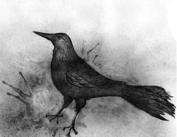 Little Grackle by GillianIvy
