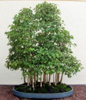 Bonsai 4 forest by Alienesse-Stock