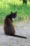 Cat Stock 38 by Malleni-Stock