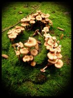 Green forrest and mushrooms by simoner