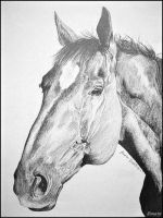 Horse - drawing by Ennete