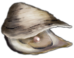 Oyster with Rose Pearl by TokoTime