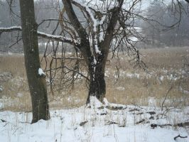 Snowy Plain 3 by TornPageDyedRed