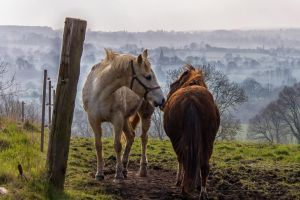 horses by hubert61
