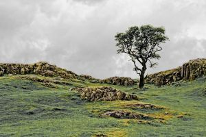 Lonely Tree by LuntPhotography
