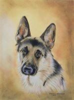 German Shepherd by DIXIEDEAN