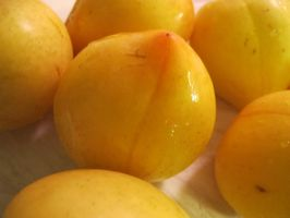 Yellow Honey Plums 1 by Windthin