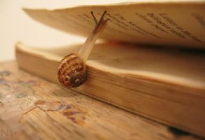 Book Snail by SodiumKid