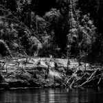 The Wild River by clippercarrillo