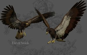 E-S Eagle by Elevit-Stock